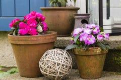 Ainda viva com os potenciômetros de flor Fotografia de Stock Royalty Free