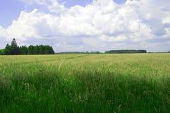 Ainda wheatfield muito verde Foto de Stock