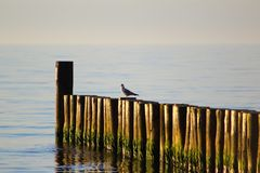 Aine à la plage de mer baltique du morskie d'ustronie, Pologne dans le soleil de soirée Photo libre de droits