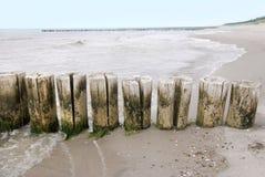 Aines de mer baltique Photos libres de droits