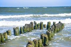 Aines en mer baltique Photo libre de droits