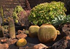 Aiola con i cactus ed il rododendro Fotografie Stock Libere da Diritti
