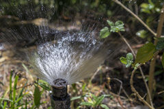 Aiola d'innaffiatura del giardino della vasca di gorgogliamento automatica dell'impianto di irrigazione Fotografie Stock Libere da Diritti