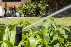 Aiola e prato inglese d'innaffiatura dello spruzzatore dell'impianto di irrigazione del giardino Immagine Stock