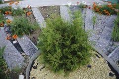 Aiola e un giardino dei fiori rossi fra i campi Immagine Stock Libera da Diritti