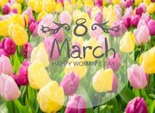 Aiola rosa, porpora e gialla dei tulipani Fotografie Stock Libere da Diritti