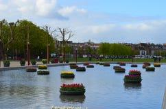 Aiole con i tulipani sull'acqua Immagini Stock Libere da Diritti