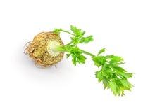 Aipo fresco com a folha da raiz no fundo branco Foto de Stock