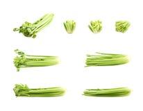 Aipo fresco verde isolado Fotografia de Stock