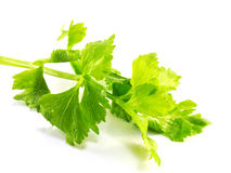 Aipo orgânico fresco no fundo branco Fotos de Stock