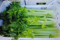 Aipo verde fresco em umas caixas no mercado inteiro da venda Imagens de Stock Royalty Free