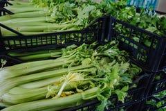 Aipo verde fresco em umas caixas no mercado inteiro da venda Imagem de Stock Royalty Free