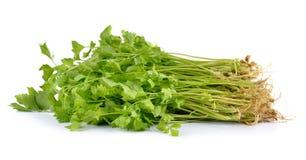 Aipo verde fresco isolado no fundo branco Fotos de Stock