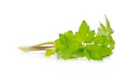 Aipo verde isolado no fundo branco Fotos de Stock