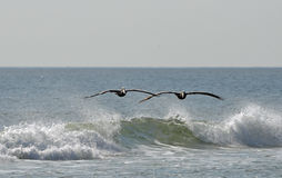 air att surfa Fotografering för Bildbyråer