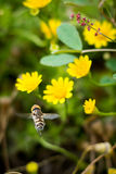 In The Air Stock Images