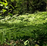 Air blanket of ferns Stock Photo