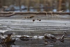 Air bubbles in ice and water Royalty Free Stock Images