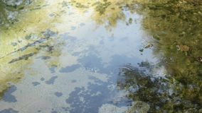 Air bubbles on the lake stock video footage