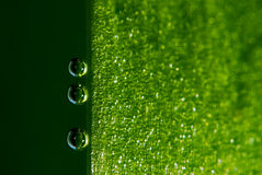 Air bubbles on leaf. Macro shot of air bubbles on leaf underwater Stock Image