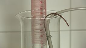 Air bubbles rise in flask. With water under laboratory conditions. Researches in laboratory. Closeup shot stock footage