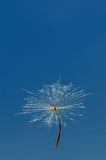 Air dandelion Royalty Free Stock Photos