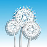 Air dandelions Royalty Free Stock Image