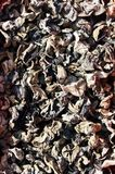 Air-dried black fungus Stock Photo