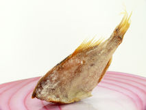 Air dried stock fish Royalty Free Stock Photography