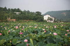 Air drone surveillance camera and lotus Royalty Free Stock Photos