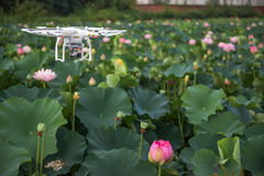 Air drone surveillance camera and lotus. An air drone with surveillance camera is flying on the lotus fields stock photo