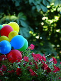 Air multi-coloured balls. And beautiful red flowers Royalty Free Stock Photography