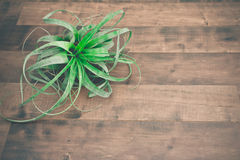 Air plant Tillandsia Stock Image