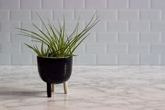 Air plants in ceramic pot, marble counter, white subway tile. Two air plants nestled in a three-legged ceramic pot on a marble countertop with white subway tile Royalty Free Stock Photos