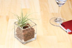 Air plants in a glass vase on the floor Royalty Free Stock Images