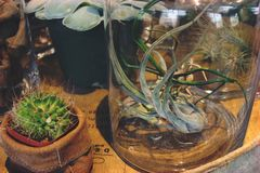 Air Plants and Succulents on Display stock photography