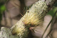 Everglades Air plants. Air plants on tree in Everglades national park Florida Stock Photography