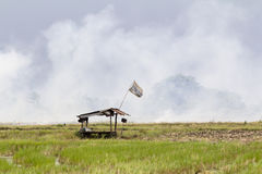 Air pollution ,farmer burn weed in rice field, Thailand. Royalty Free Stock Photo