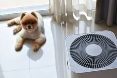 Free Air Purifier System Cleaning Dust Pm 2.5 Pollution In Living Room With Cute Dog Stock Photography - 169387012