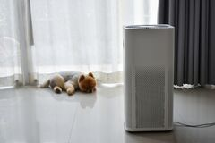 Free Air Purifier System Cleaning Dust Pm 2.5 Pollution In Living Room With Cute Dog Stock Photos - 169387033