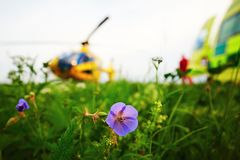 Air rescue service. Air ambulance is landing on the meadow. Cooperation air rescue service with emergency medical service on the ground. - selectiv focus on the stock image