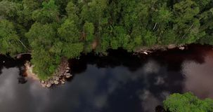 Air view of a River in the Amazon Jungle. 4K Air footage of a black water river in the Amazon jungle, Venezuela, South America stock video