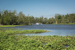 Airboat with tourists in the swamps Stock Photos