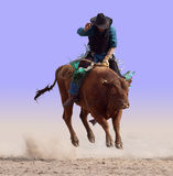Airborne on a Bull. Isolated with clipping path royalty free stock photography