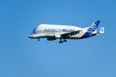 Airbus Beluga Stock Photography