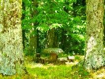 Aire de pique-nique sur la forêt images libres de droits