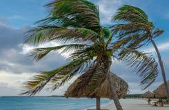 Aire de repos avec des palmiers par la plage dans Aruba Photographie stock