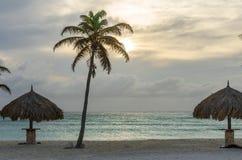 Aire de repos avec des palmiers par la plage dans Aruba Images libres de droits