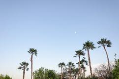 Aire de repos avec des palmiers par la plage dans Aruba Image libre de droits