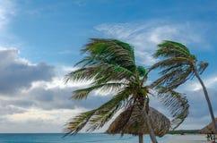 Aire de repos avec des palmiers par la plage dans Aruba Photos libres de droits